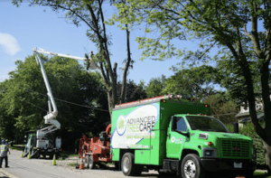 Tree pruning specialists